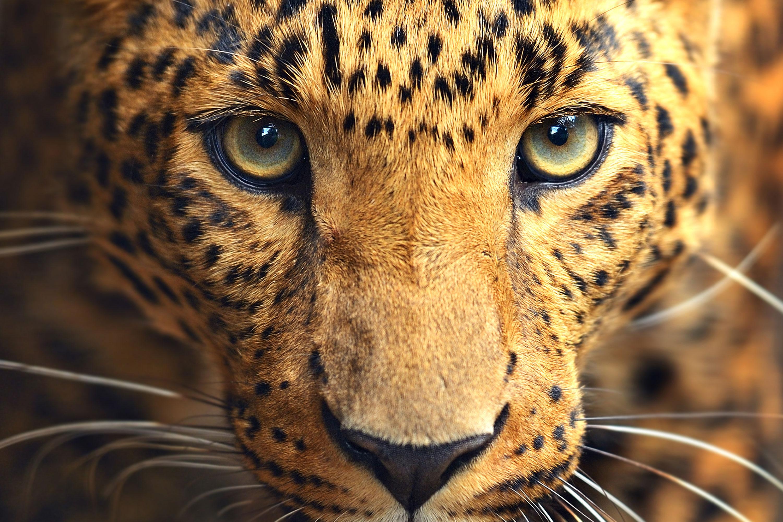 El instinto animal